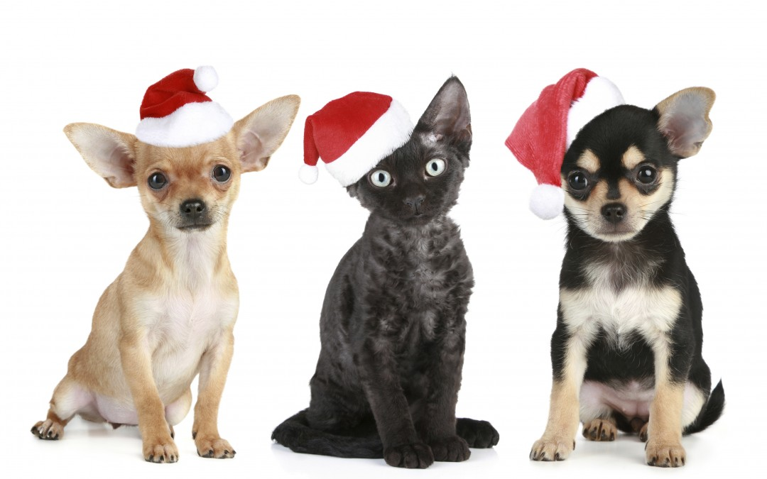 Fifth Annual Facebook Christmas Pet Photo Contest