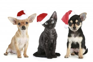 Christmas Pet Photo Contest