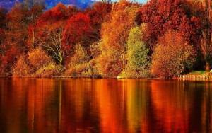 Fall reflection