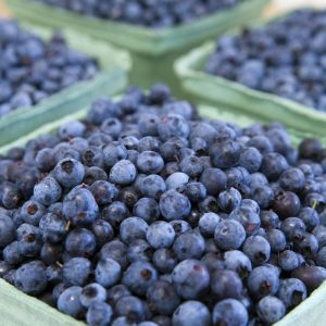Maine Blueberry Facts